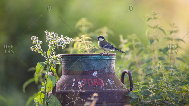 Bird standing on a rusty container in a secluded field