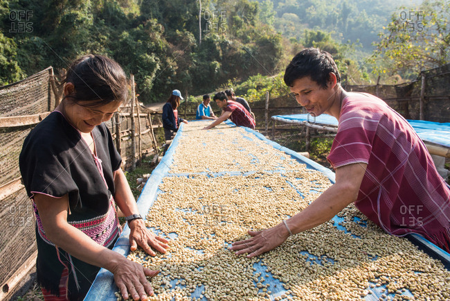 Chiang Mai, Thailand - February 14, 2018: Asian Karen farmers working on a dry coffee process