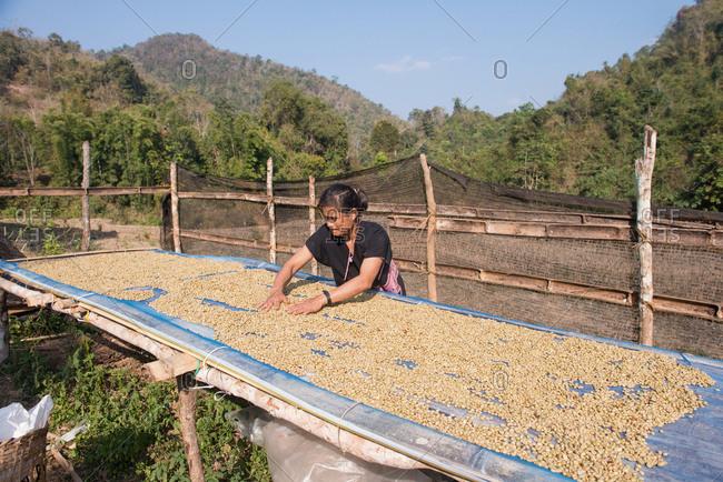 Chiang Mai, Thailand - February 14, 2018: Asian Karen woman farmer working on a dry coffee process at Ban Pong Sayan