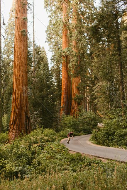 Skateboarder skateboarding on sequoia tree lined road, Sequoia National Park, California, USA