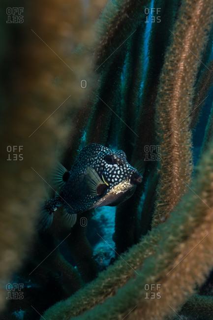 Fish in coral reef, Chinchorro Banks, Xcalak, Quintana Roo, Mexico