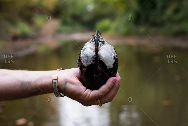 Hand holding a large clam shell