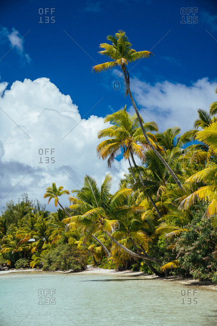 Palm trees on the coast of Aitutaki, Cook Islands
