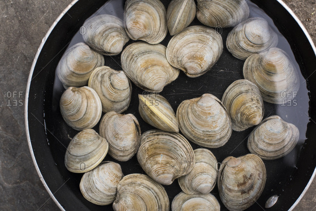 Clams soaking in a pot of water on outdoor table