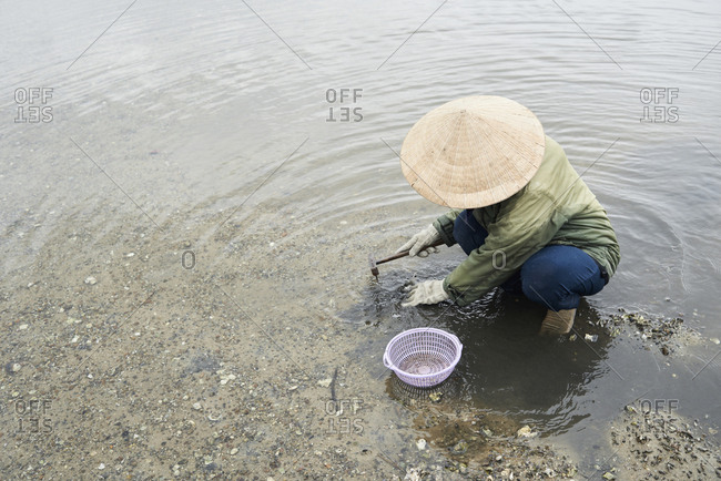 Overhead of faceless woman fishing clamshells in lake with hat and basket
