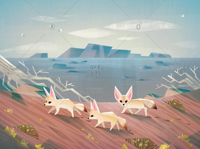 Fennec foxes exploring the desert