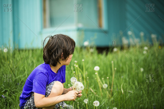 Boy picking dandelion seeds while crouching on grassy field at yard