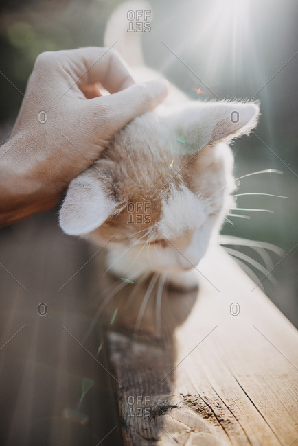 Cropped hand of woman petting kitten sitting on wooden table