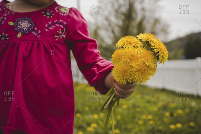Midsection of girl holding flowers while standing on grassy field at yard