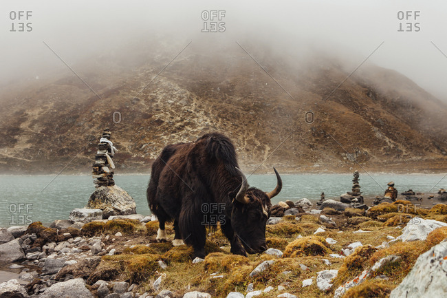 Yak standing at riverbank during foggy weather