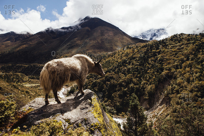 Yak standing on mountain against cloudy sky at Sagarmatha National Park during sunny day