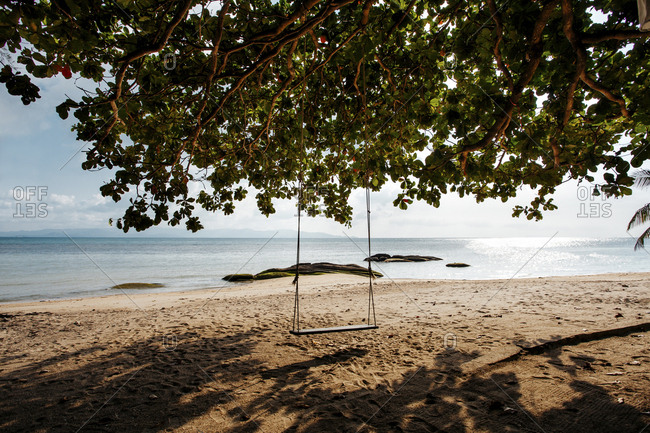 Empty swing hanging on tree at beach against sky during sunny day
