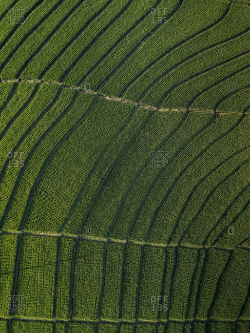 Aerial view of agricultural landscape at Bali