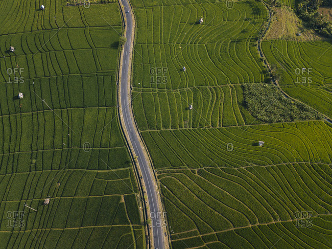 Aerial view of empty road amidst agricultural field