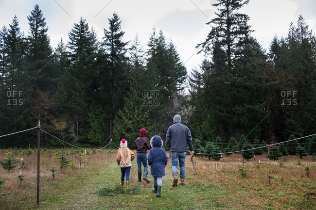 Family looking for Christmas tree on a tree farm