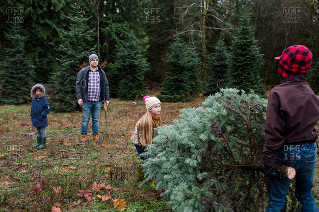 Family picking out a Christmas tree on a tree farm