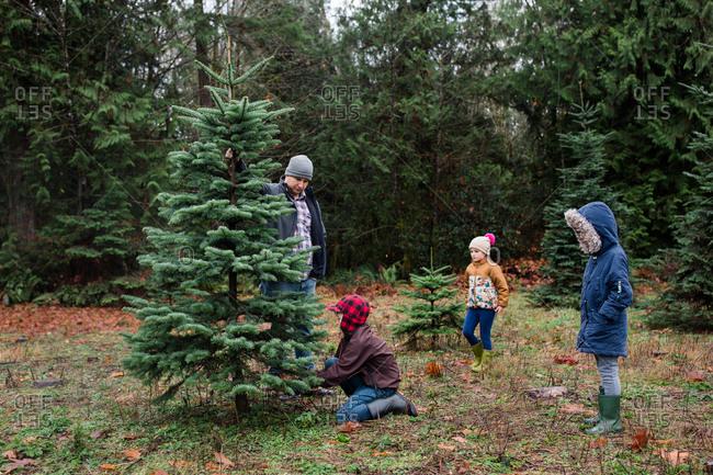 Family cutting down a Christmas tree on a tree farm