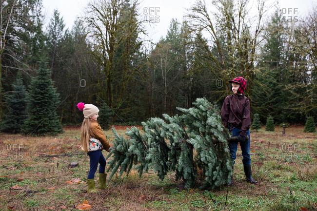 Two kids carrying cut down pine tree
