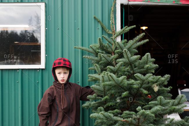 Boy standing by fresh cut pine tree