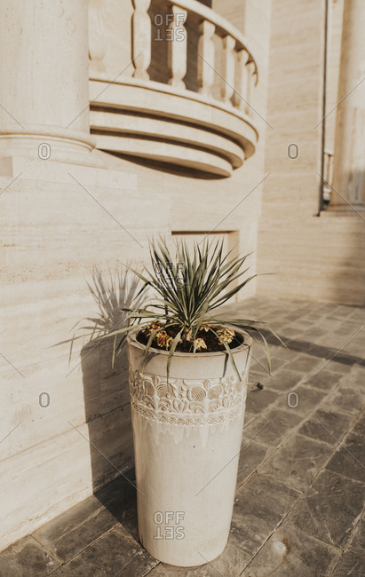 Potted plant on a patio