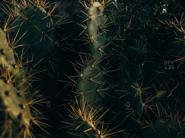 Close-up spiky cactus