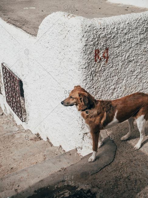 Small dog at rough wall outdoors
