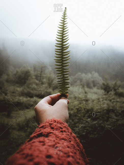 Hand in red holding small fern in mist