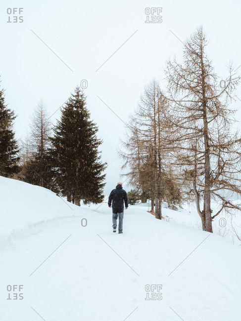 Small evergreen trees in snowy nature in winter day.