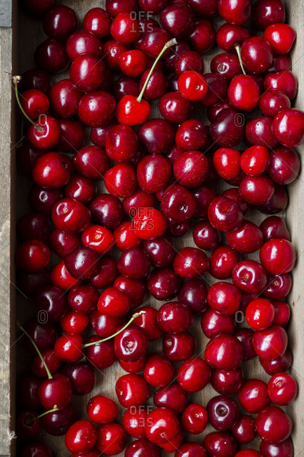 Sweet farm fresh cherries washed and ready to eat