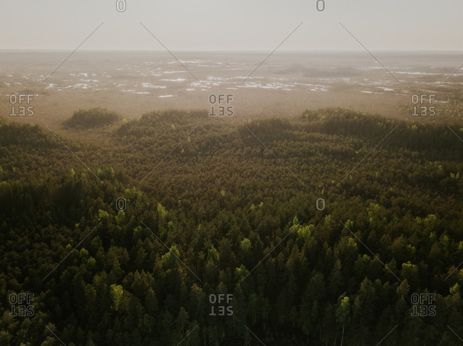 Elevated view of sun shining over dense forest