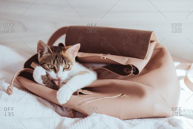 Cat in pink bag
