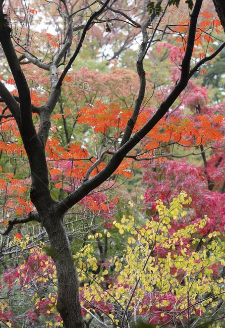 Vibrant leaves and branches in Meiji shrine gardens