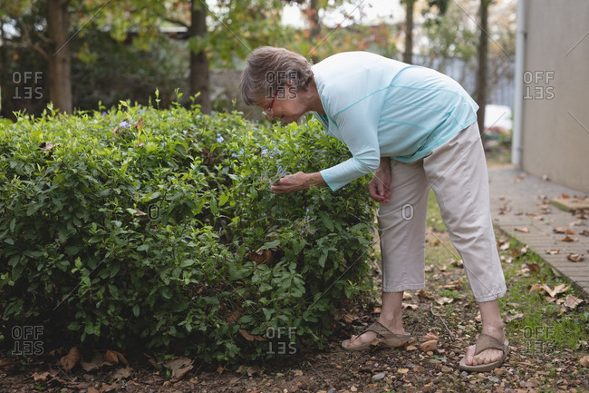 Senior woman checking plants in the backyard during daytime