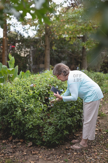 Senior woman photographing plants with a mobile phone