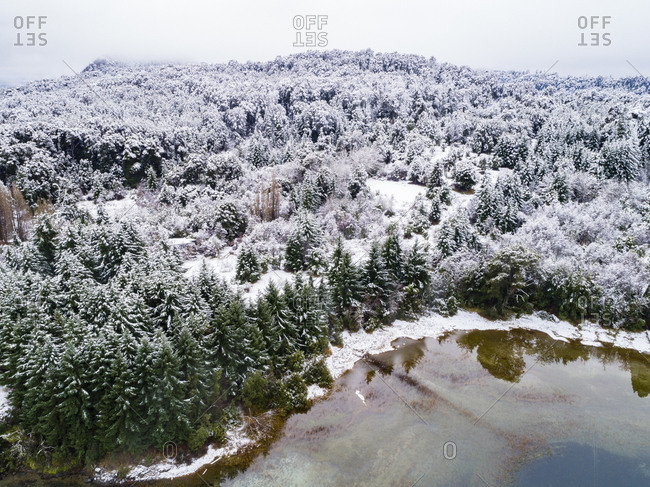 Snowy trees by Moreno Lake, Bariloche, Argentina