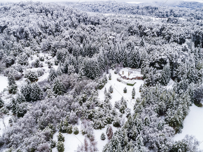 Dense forest surrounding house in winter, Bariloche, Argentina