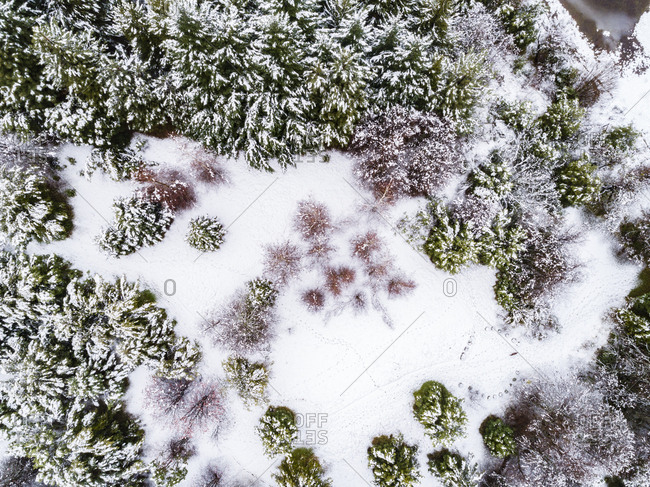 Aerial view of snow covered trees in rural Bariloche, Argentina