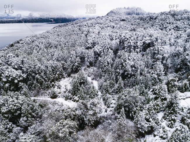 Dense forest and lake in winter, Bariloche, Argentina