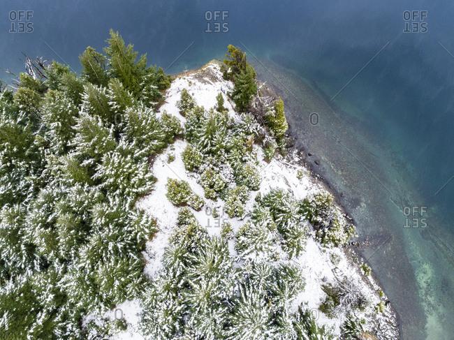 Green trees on the shore of Moreno Lake, Bariloche, Argentina in winter