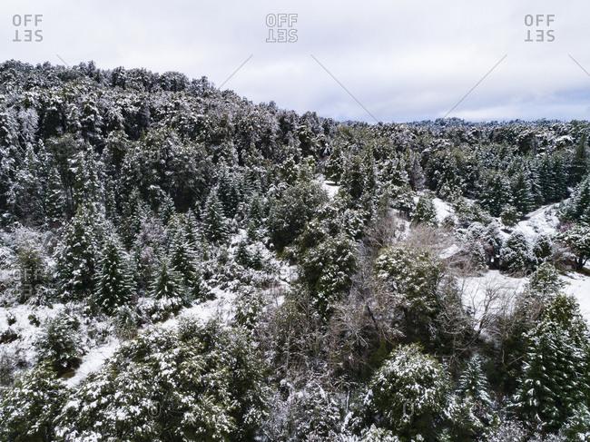 Dense forest in rural Bariloche, Argentina at winter