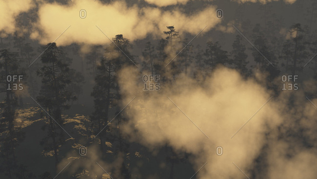 Golden hour fog settling over forest