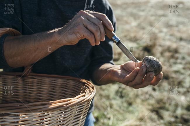 Man cutting a edible white champignon mushroom