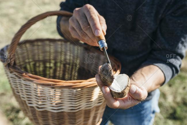 Man slicing champignon mushroom on a farm