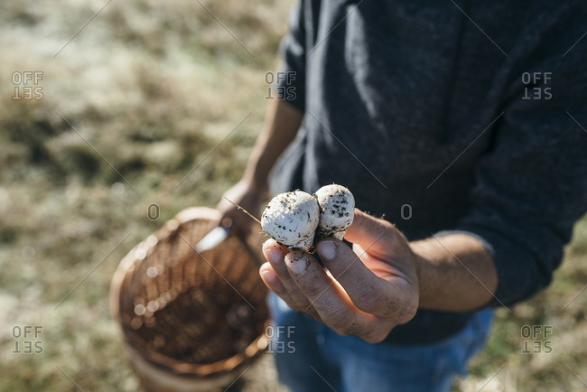 Man examining dirty mushrooms outside