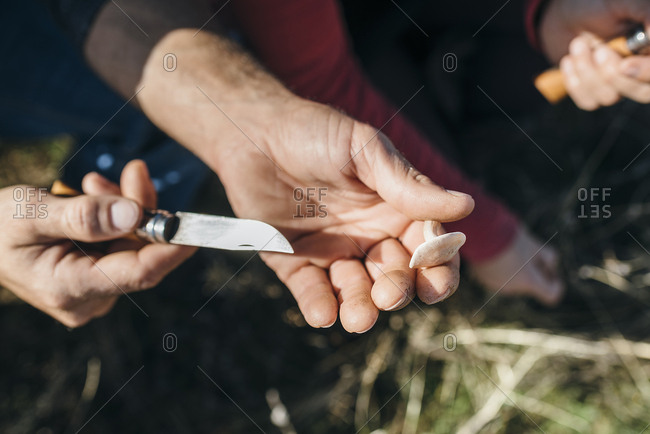 Man's hands showing edible mushroom with knife