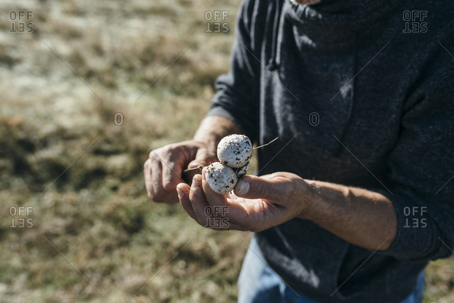 Man slicing fresh picked mushrooms outside