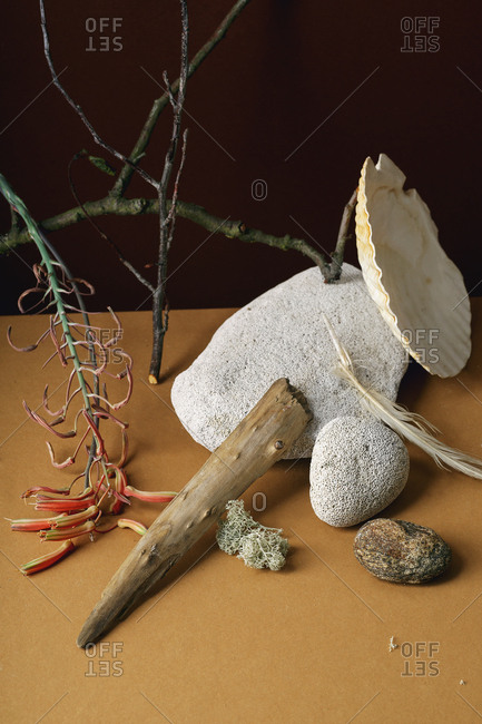 Minimalistic still life with succulent flower, sea shell and forest moss with stones and wooden branches