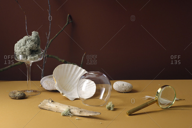Minimalistic still life with sea shell and forest moss with glass accessories
