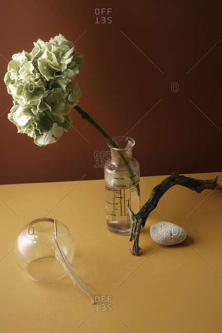 Minimalistic still life with hydrangea flower and tree branch with glass accessories