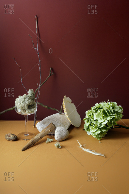 Minimalistic still life with hydrangea flower, sea shell and forest moss with glass accessories